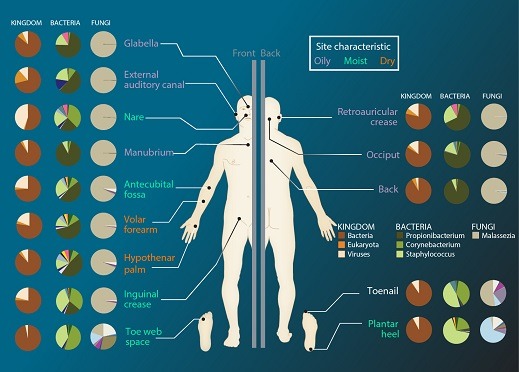 The Human Microbiome Market Is Estimated to Grow with a CAGR of 21.8% from 2018-2025